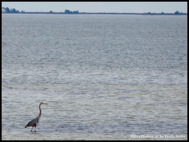 An der Apalachiacola Bay