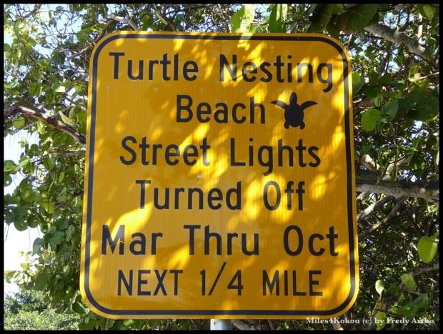 Ja an dieser Beach legen die Meeresschildkröten ihre Eier ab, und die Amis schalten sogar die Strassenbeleuchtung aus, um die Tiere nicht zu stören. Wer hätte das gedacht?