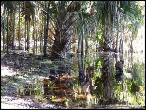 Floridas Sümpfe