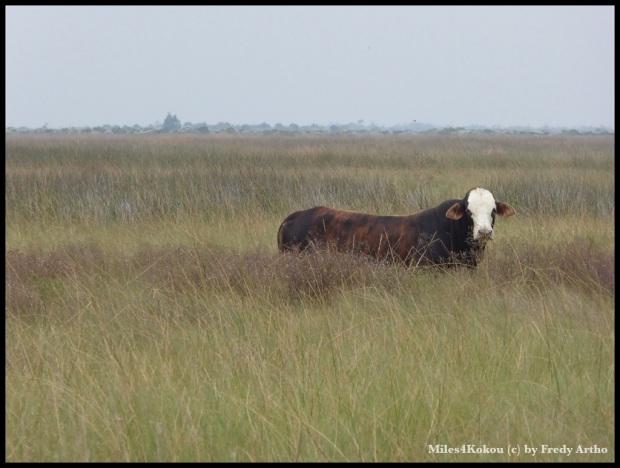 """Sie hat sicher genug Platz auf der """"Weide""""."""