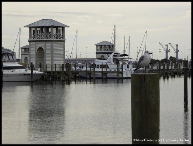 Am Hafen von Gulfport.