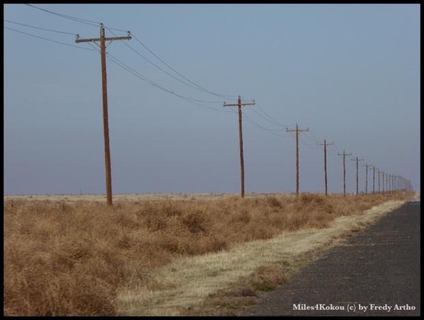 Tumbleweed wird vom Zaun zurückgehalten, so dass es riesige Berge davon gibt. Bis der Wind dreht.